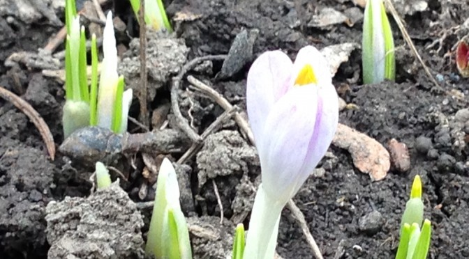 Spring and Fresh Starts